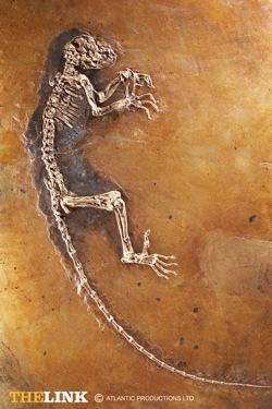 fossil_plate_full.jpg