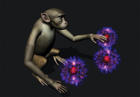 monkey-brain