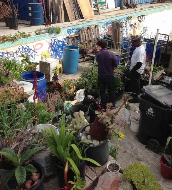 In an abandoned swimming pool behind his house, Ron Finley is growing artichokes, brocolli, kale and more, plus succulents and cacti (check out the mini garden behind the blue tiles). The blue barrels are collecting rainwater, and the black bins are for compost. Photo: Nick Weinberg
