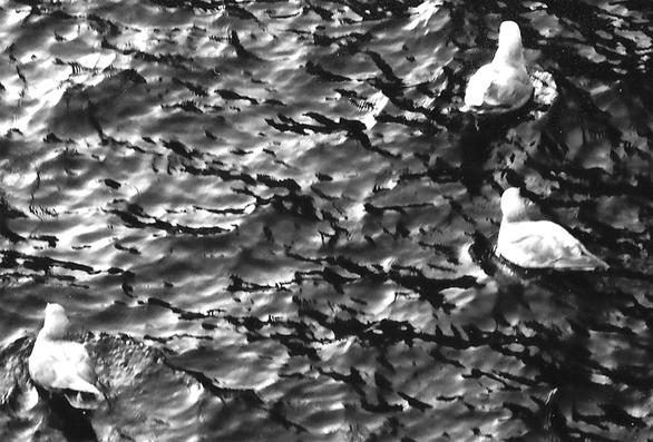Phil-Hansen-duck-image