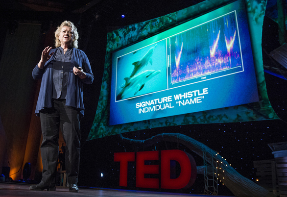 Denise Herzing shares at TED2013 how she and her team use keyboards to communicate with dolphins. Photo: James Duncan Davidson