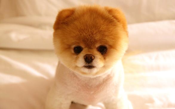 Boo-Cute-Dog