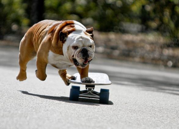 Tillman-on-skateboard