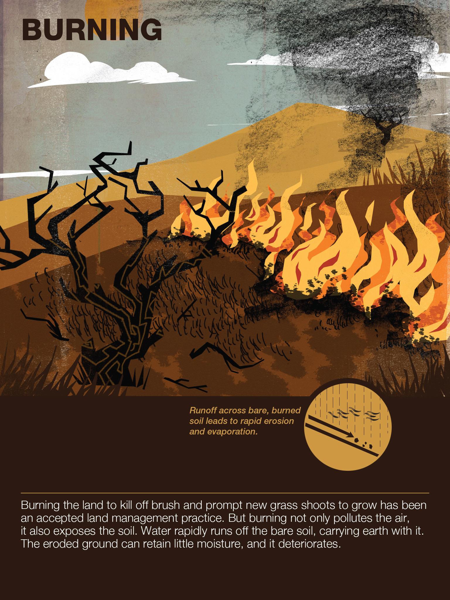 Burning. A widely-accepted land management strategy, this graphic hints why it may not be so good after all.