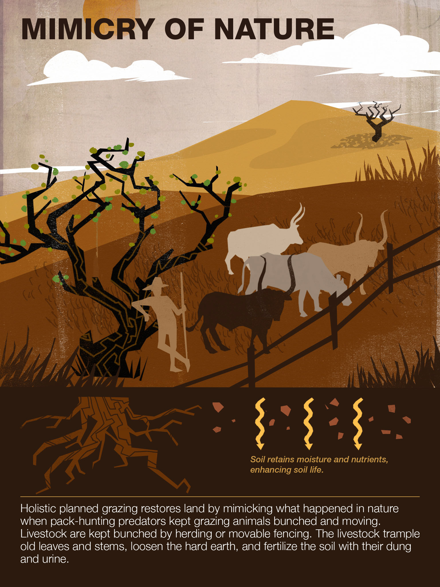 Mimicry of nature. A look at what Savory's holistic management strategy aims to accomplish.