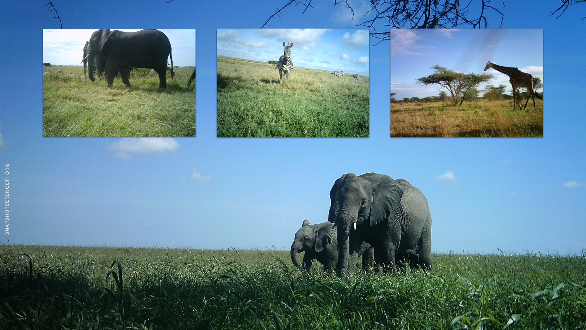 Examples of images from the Snapshot Serengeti project. Image: Zooniverse