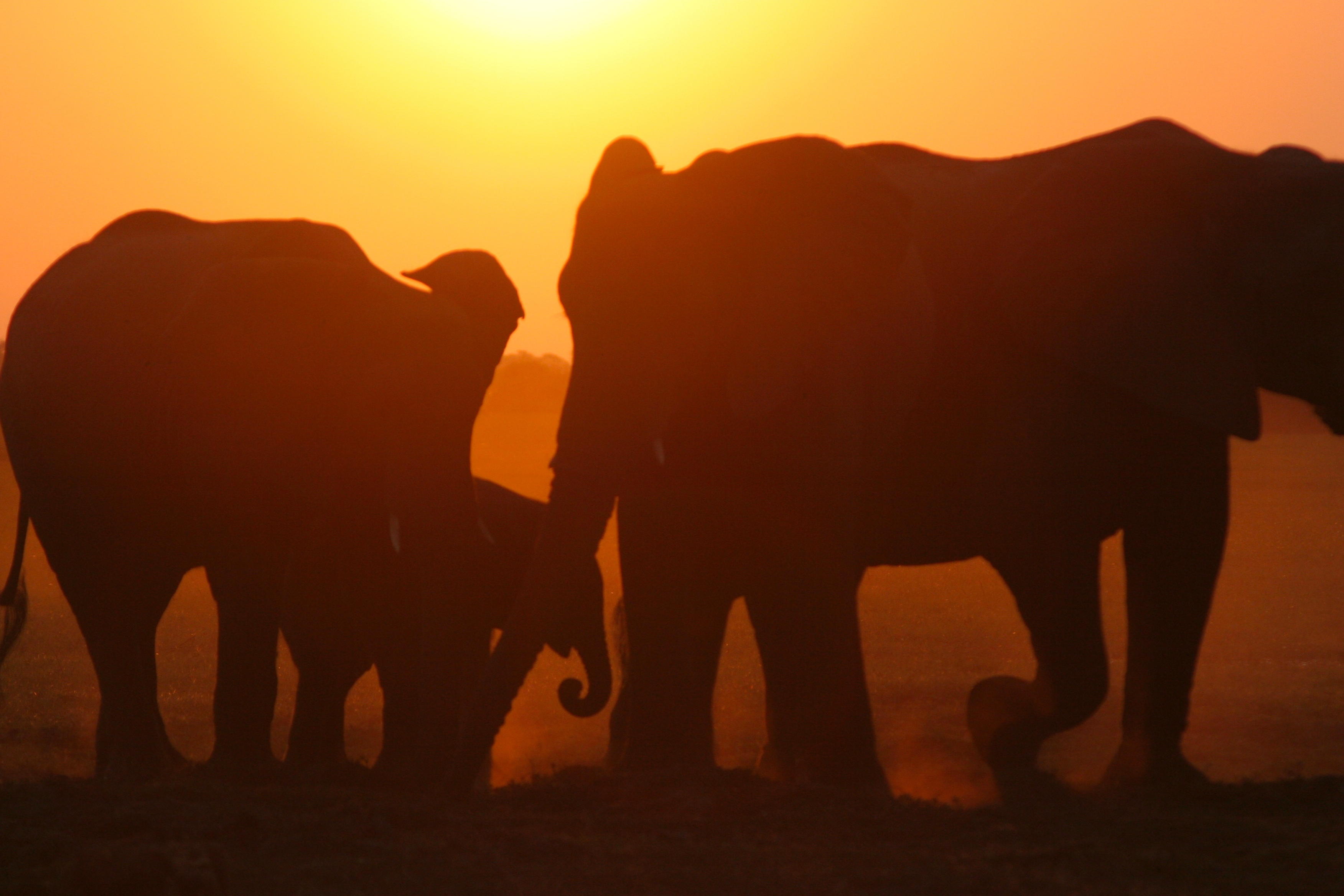 Elephants at sunset. Photo: Wild Bird Trust