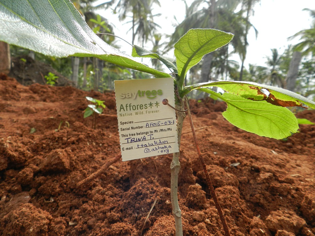 A freshly planted sapling. Photo: Afforestt