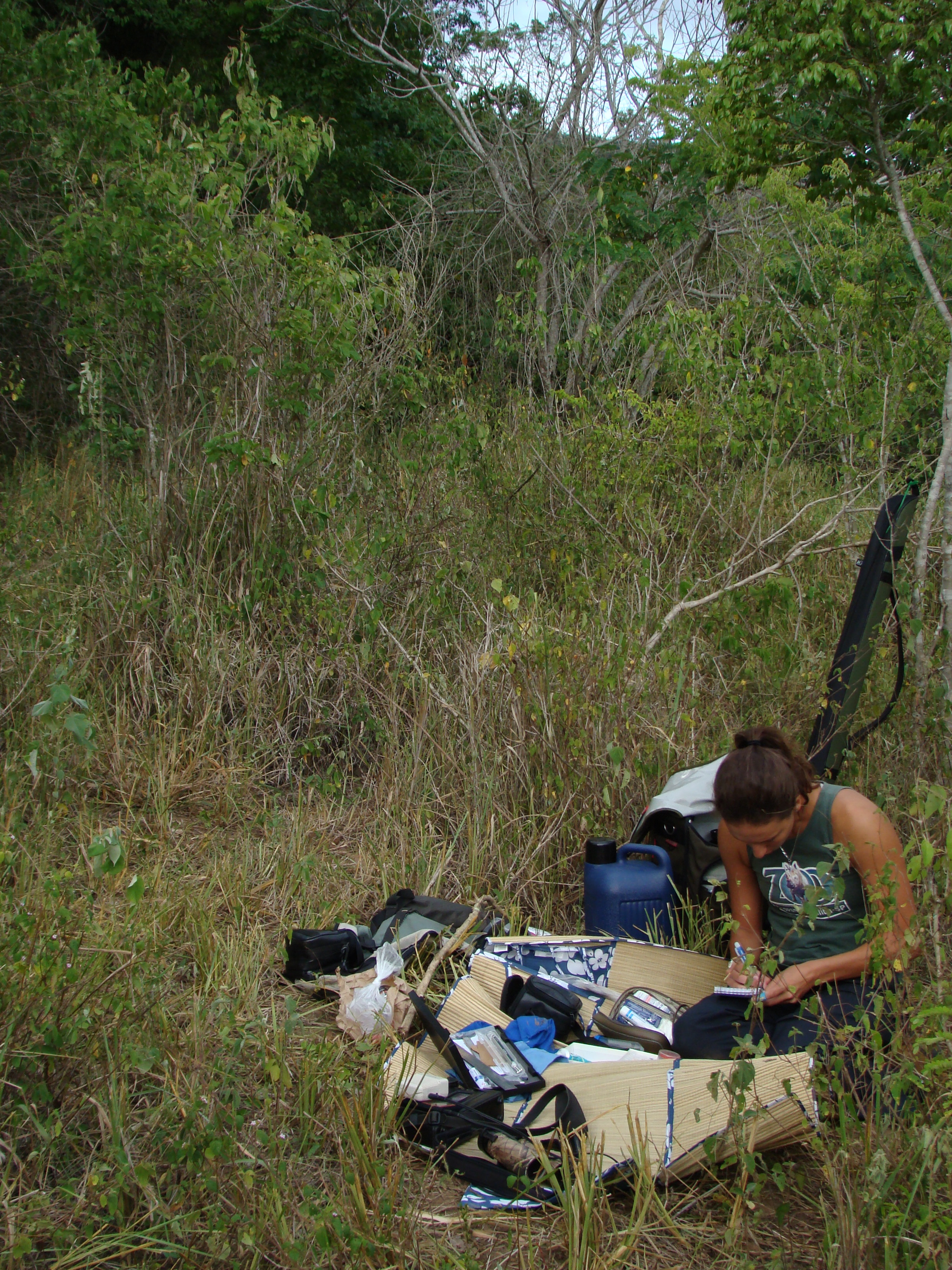 Ferreira doing field work in Bahia: writing down data and preparing to catch, take a blood sample from, weigh, measure, legband, rehydrate a bird. Photo: Fabio Schunck
