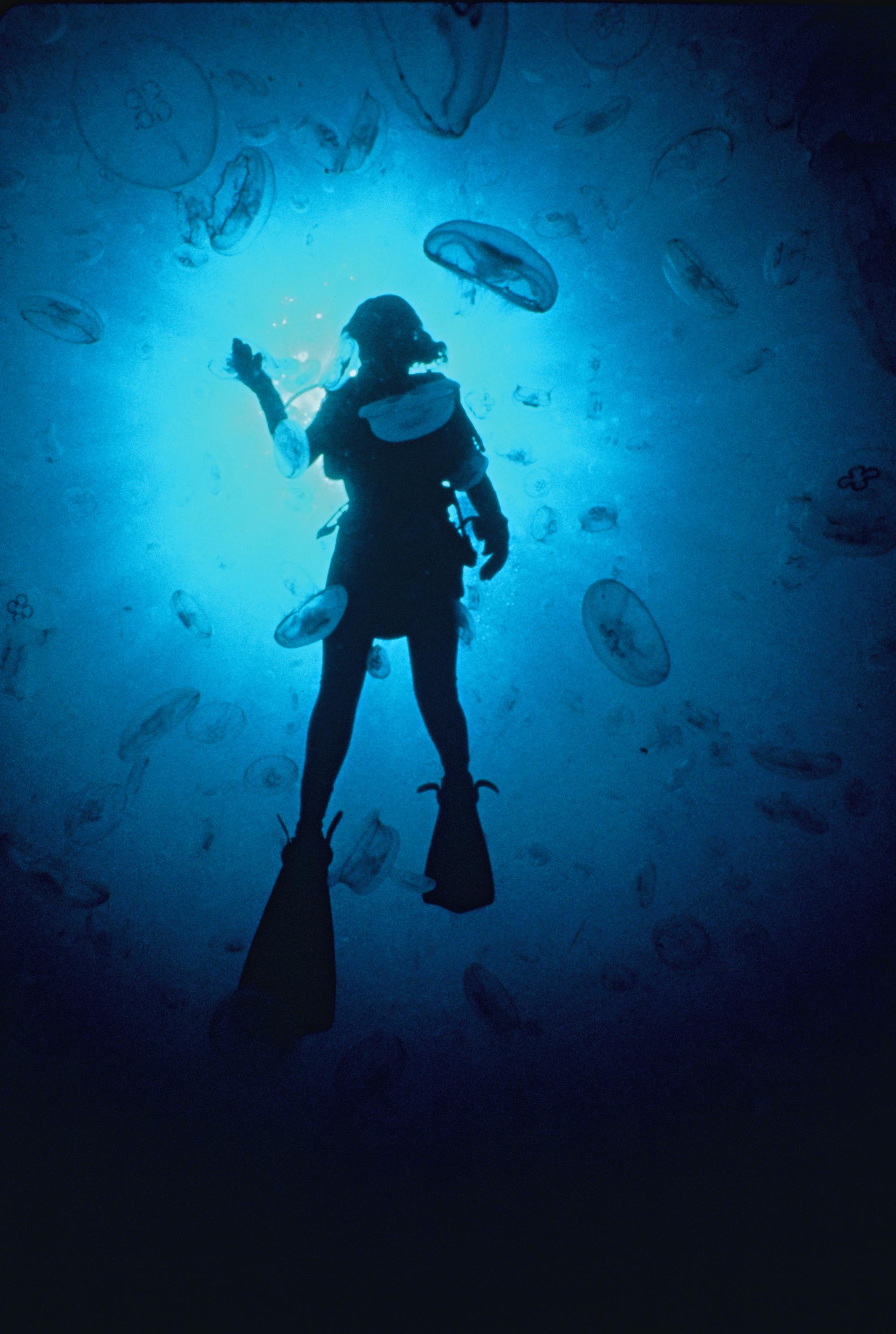 Sylvia Earle amidst jellyfish.