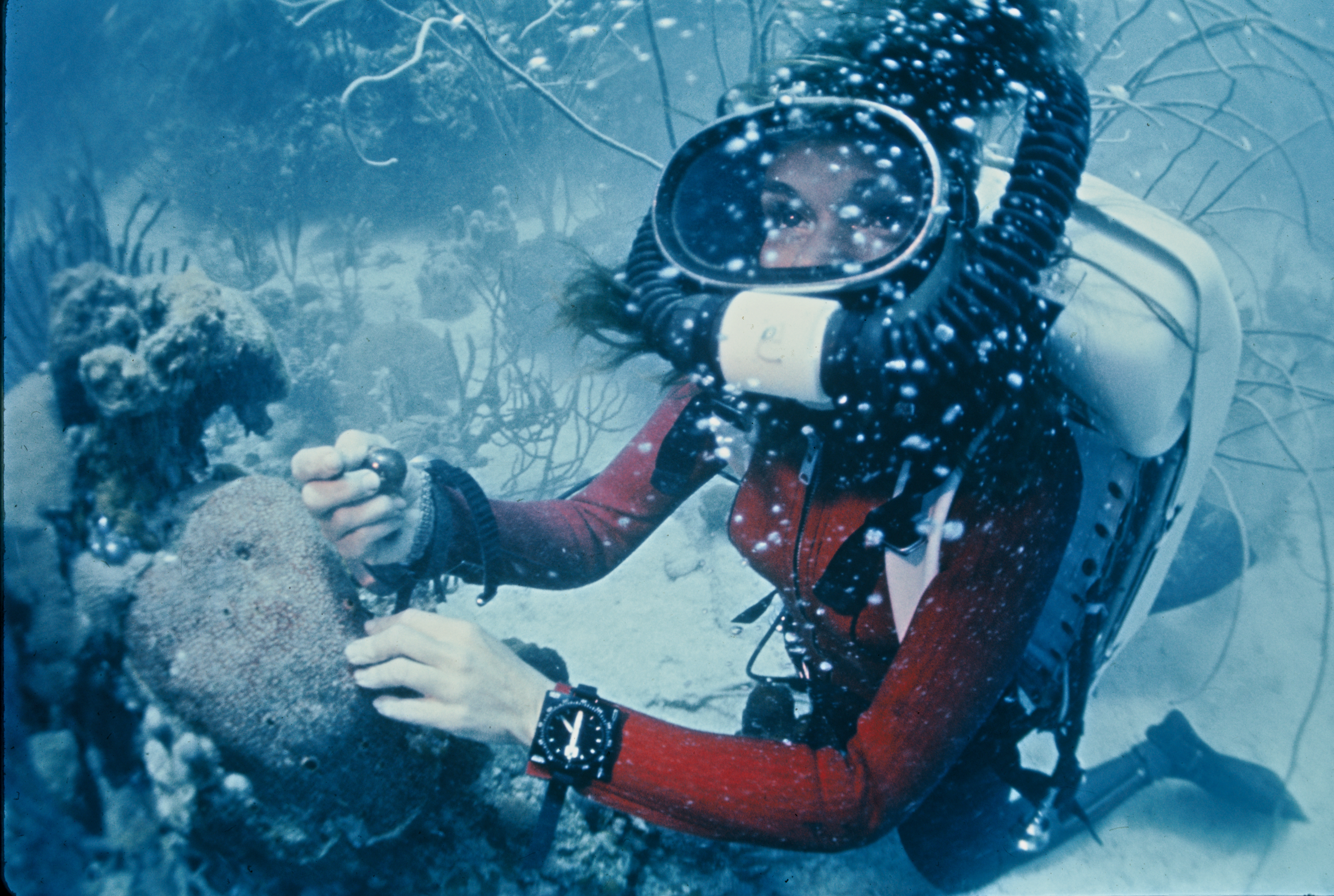 Sylvia Earle where she's most at home, underwater. Photo: Mission Blue