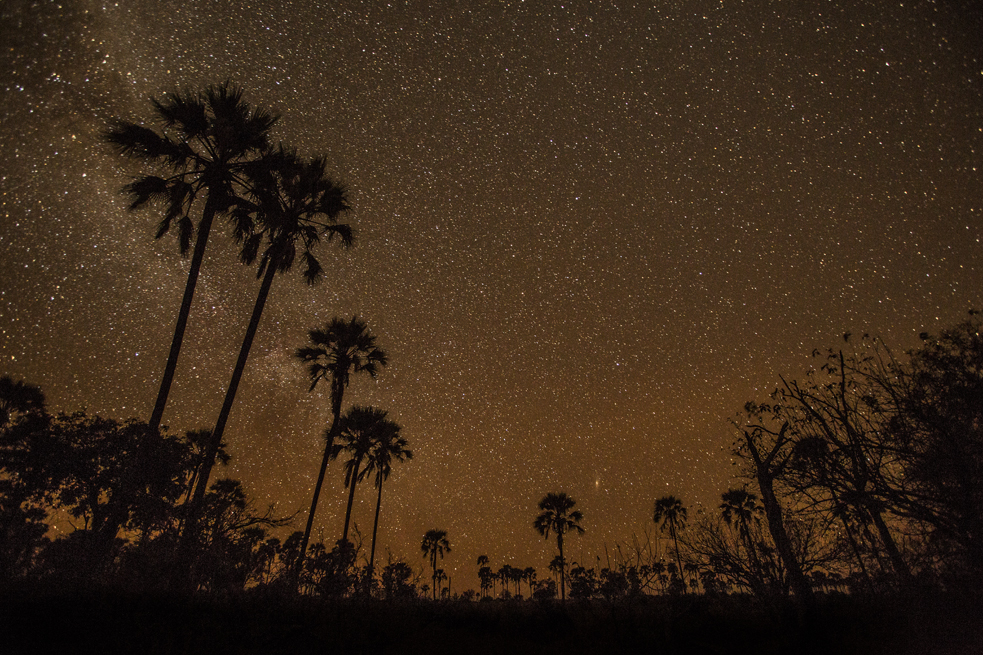 A Fotokite captured this stunning image of the stars and palms in the Okavango Delta in South Africa. Sergei Lupashin gave fellow TED Fellow Steve Boys one of the devices, to help him capture the landscape from unusual angles. Photo: Courtesy of Steven Botes