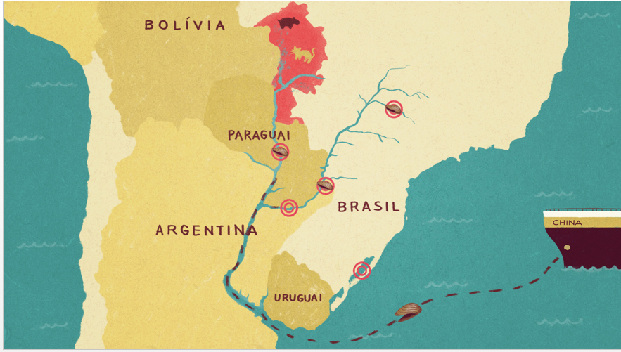 Map of the mussel migration. The golden mussel originated from Asia, and was introduced into the river basin systems of South America in the 1990s via ballast water. Today it has proliferated throughout the region's wetlands and is threatening to reach the Amazon. Image: Julia Back