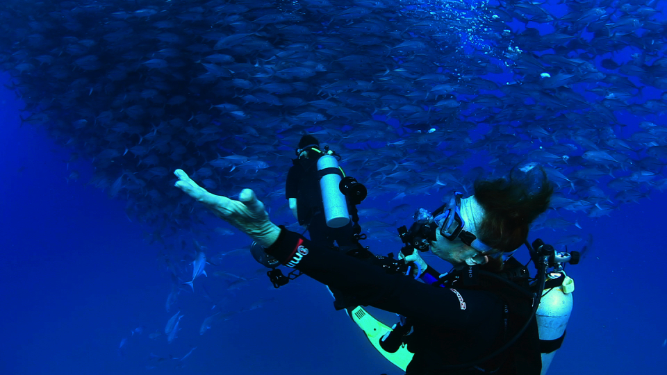 Sylvia Earle checks out a school of fish in the documentary Mission Blue. Photo: Courtesy of Mission Blue