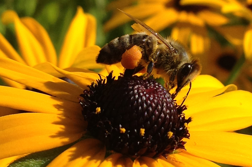 """Katherine Collins named her investment firm """"Honeybee Capital."""" Here, she takes a photo of her company's namesake. Photo: Katherine Collins"""