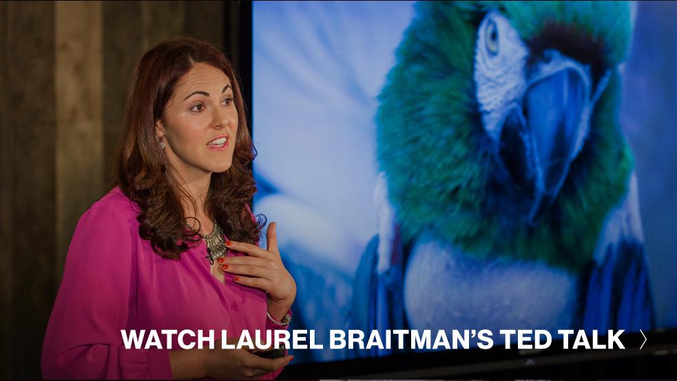 Laurel-Braitman-CTA