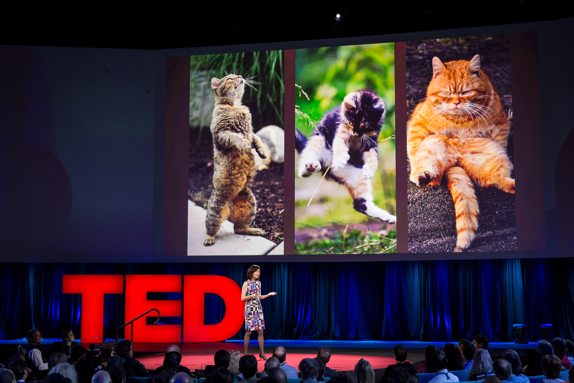 A toddler can identify a cat in a photo -- even though cats take many, many forms. Fei-Fei Li imagines an AI that could someday do the same. Photo: Bret Hartman/TED