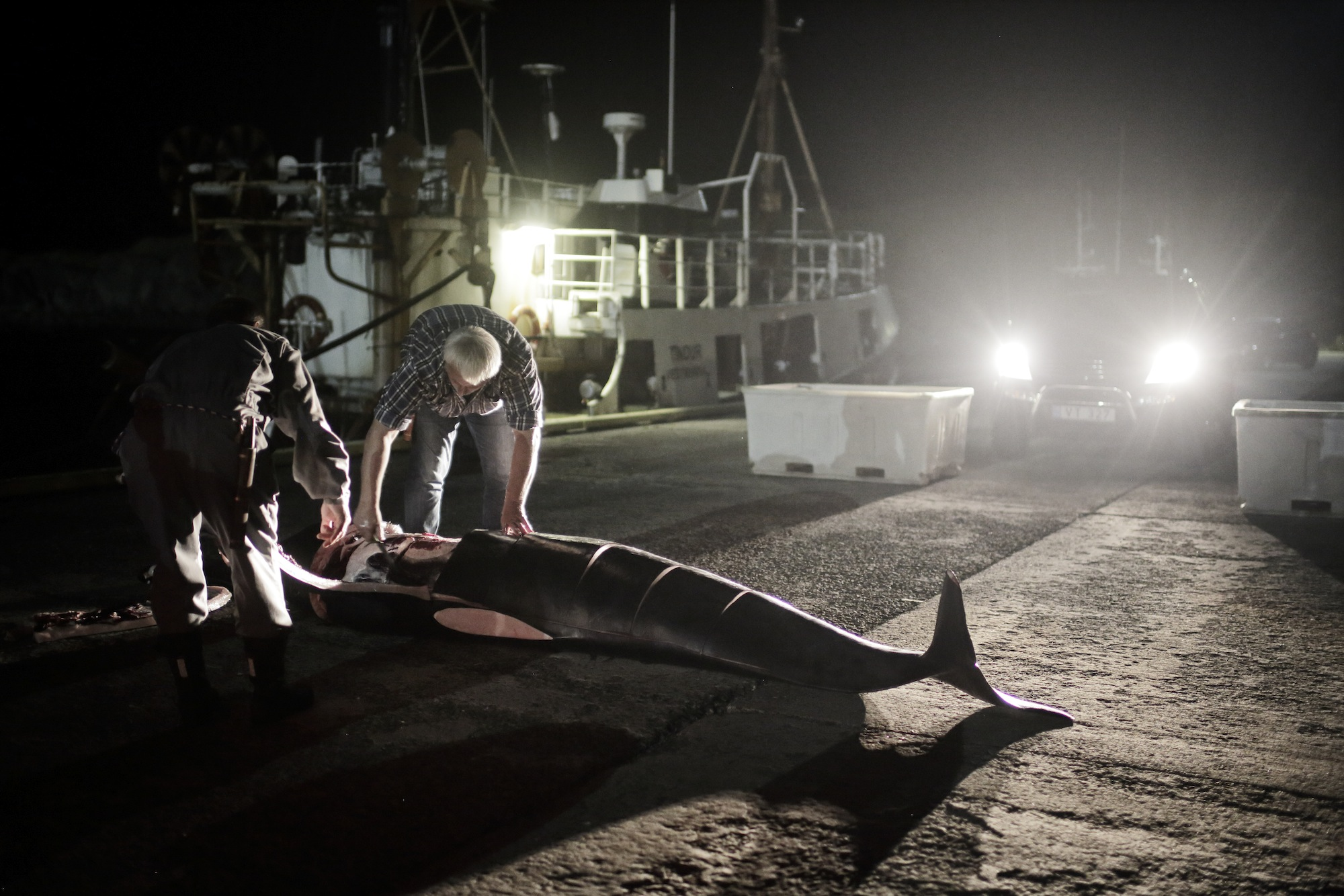 """Men harvest the meat of a pilot whale after a hunt in Sandur, Faroe Islands on Aug. 30, 2014. Not much can grow here, so the inhabitants have survived throughout the centuries by hunting seabirds, fishing, and raising sheep. The Faroese also hunt pilot whales. They call his hunt the grind. The word """"grind"""" can refer to the pilot whales themselves, the whale meat, or the event of the hunt. The tradition has endured for nearly 1,000 years. The grind usually occurs in the summer, but there is no set date, or even a set season. A grind can happen at any minute. When a pod is spotted, everyone drops what they're doing to participate in the hunt. The hunt has always been non-commercial, the meat is shared among the community.  (Ed Ou/Reportage by Getty Images)"""