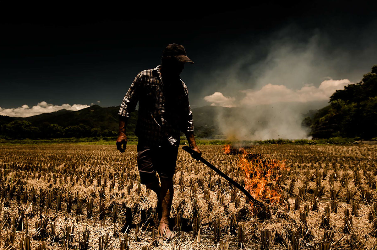 In rice-producing countries, rice straw is often burned on the field in preparation for new crops. Photo:  Scott Gable