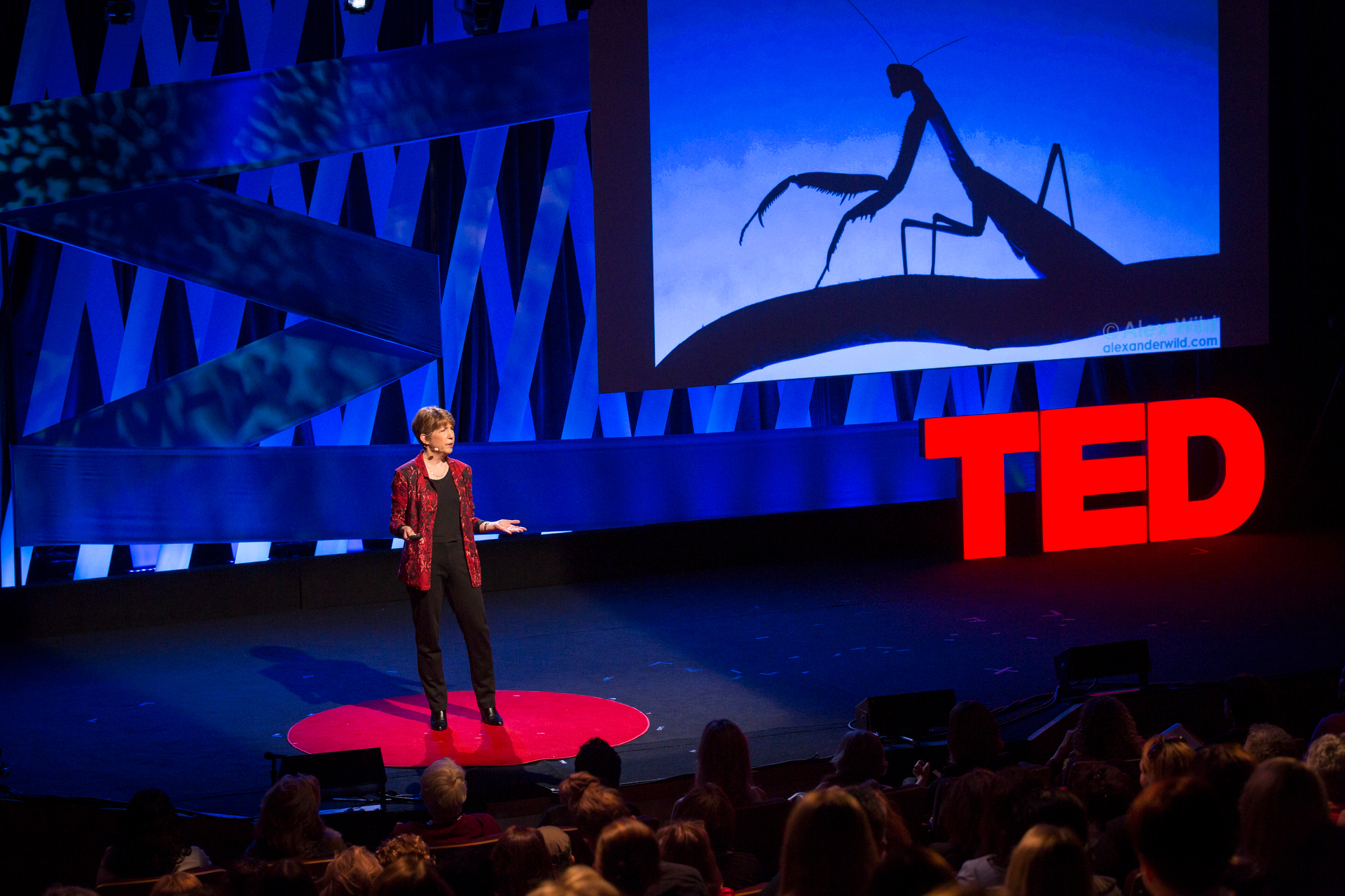 Marlene Zuk speaks at TEDWomen2015 - Momentum, Session 3, May 28, 2015, Monterey Conference Center, Monterey, California, USA. Photo: Marla Aufmuth/TED