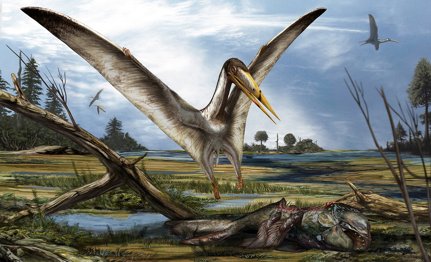 Alanqa saharica, one of Ibrahim's discoveries, is a flying reptile with a 20-foot wingspan. Alanqa is the Arabic/Persian word for phoenix. Image: TK