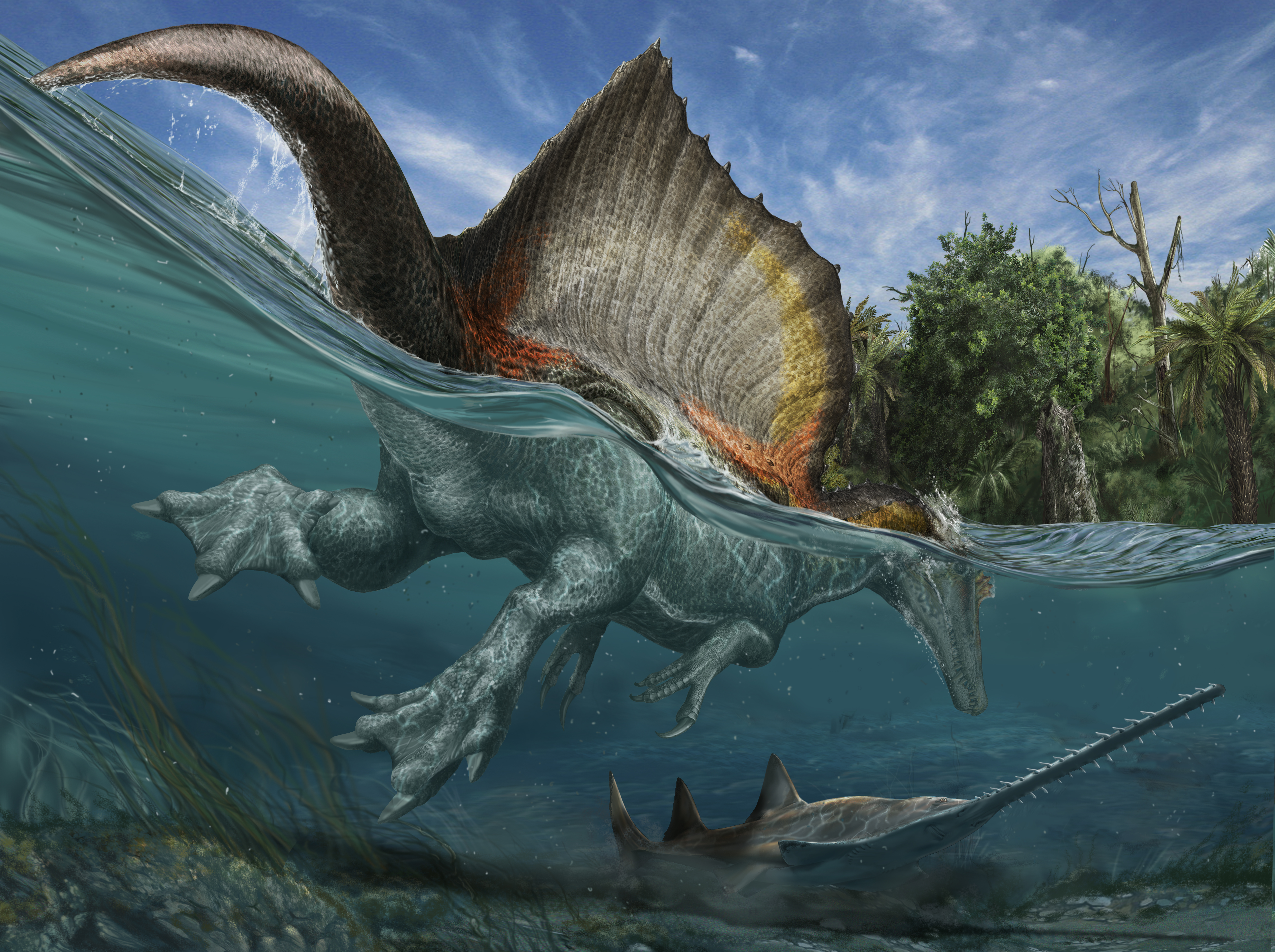 An artist's rendering, based on Ibrahim's research, of Spinosaurus and the river ecosystem that existed 100 million years ago, in what is now the Sahara desert. Image: Davide Bonadonna Maganuco