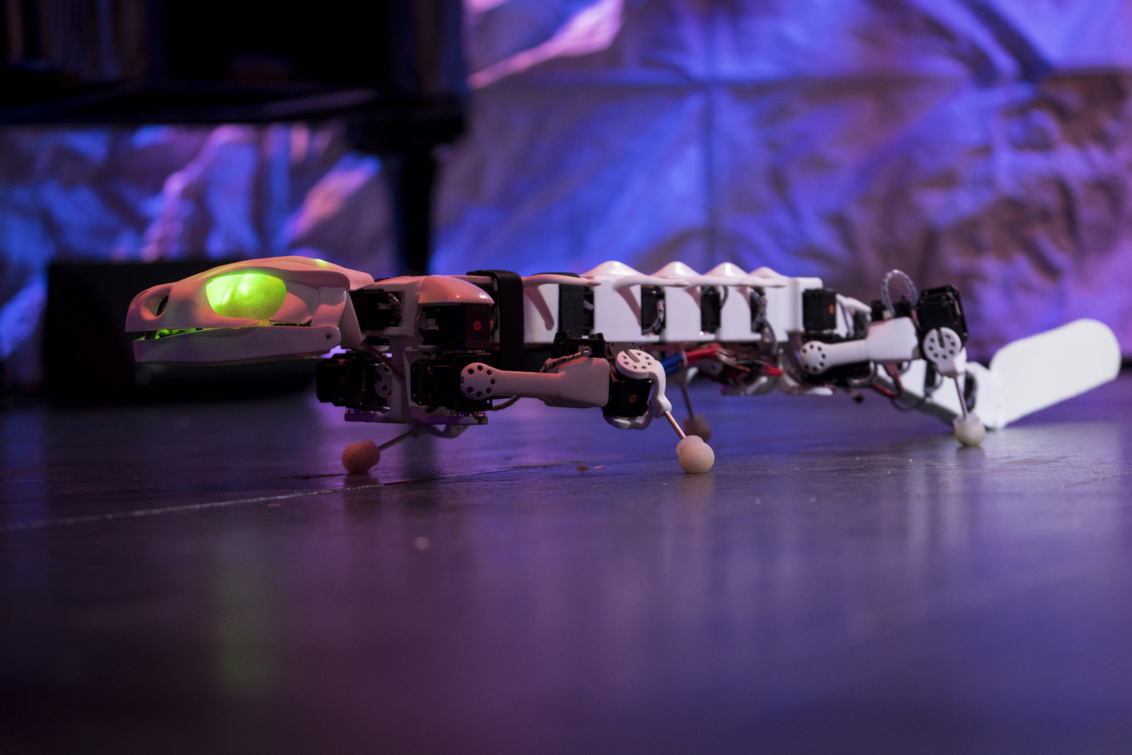 A salamander robot from Auke Ijspeert's lab in Switzerland is helping us understand how animals move -- and how to make better robots too. Photo: James Duncan Davidson