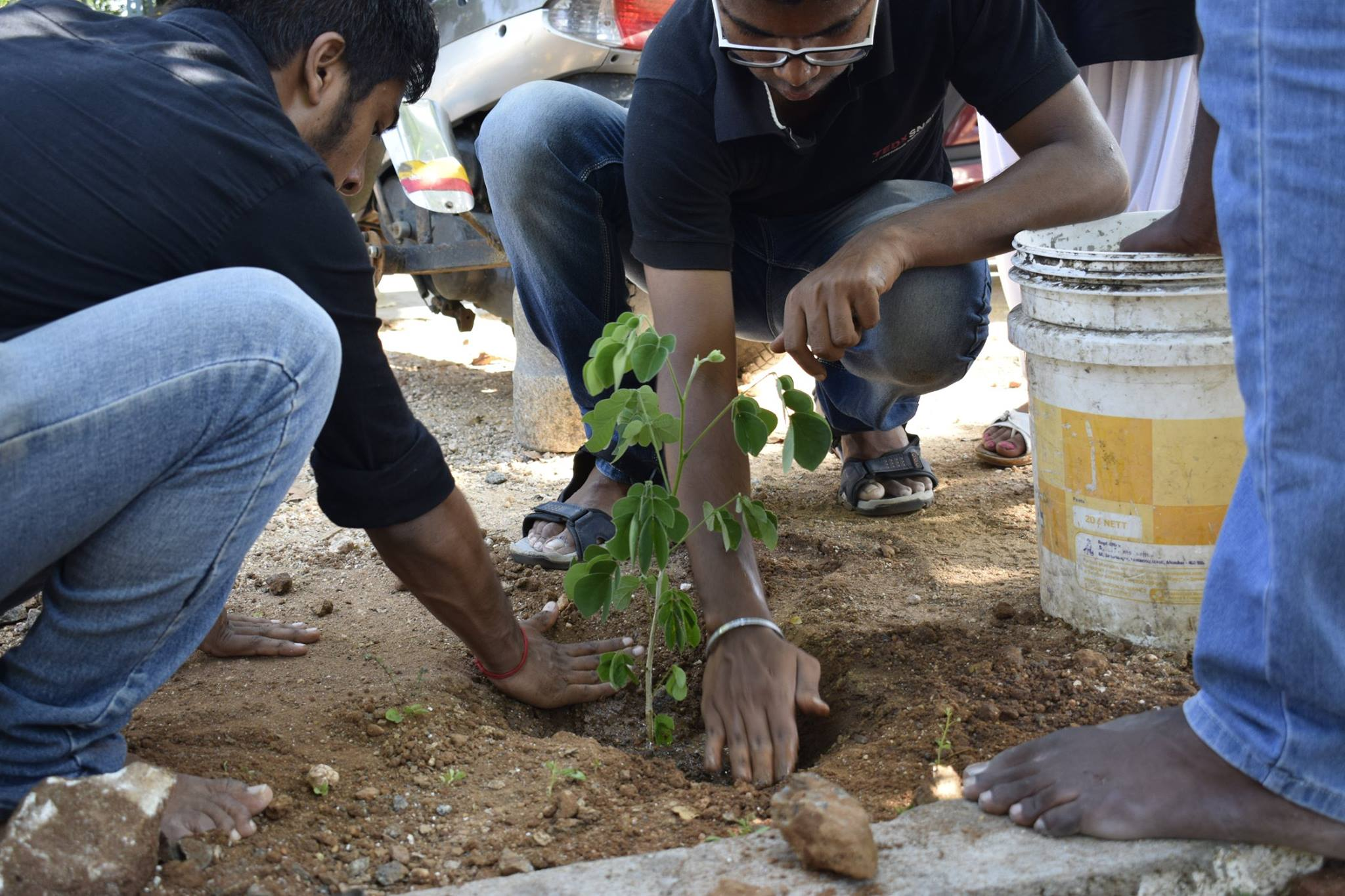 Two men pat at the earth around a newly planted sapling