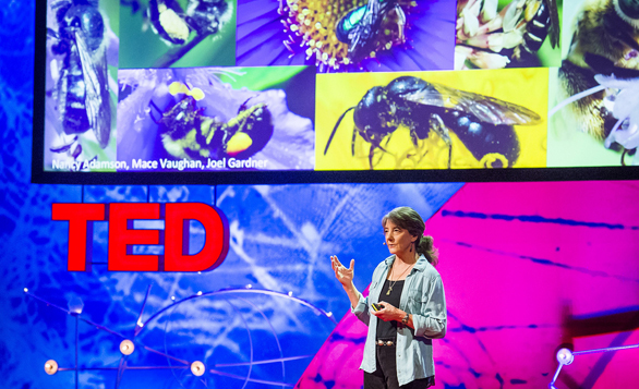 Marla Spivak speaks on the beauty and tragedy of bees at TEDGlobal 2013. Photo: James Duncan Davidson