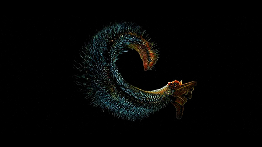 Previous University of Delaware research confirmed that the Pompeii worm is the most heat-tolerant animal on Earth, able to survive an environment as hot as 176°F. Covering this deep-sea worm's back is a fleece of bacteria. These microbes may possess heat-stable enzymes useful in a variety of applications, such as pharmaceutical production, food processing, paper and textile manufacture, and others. Photo: University of Delaware College of Marine Studies http://www.nsf.gov/od/lpa/news/press/01/pr0190images.htm