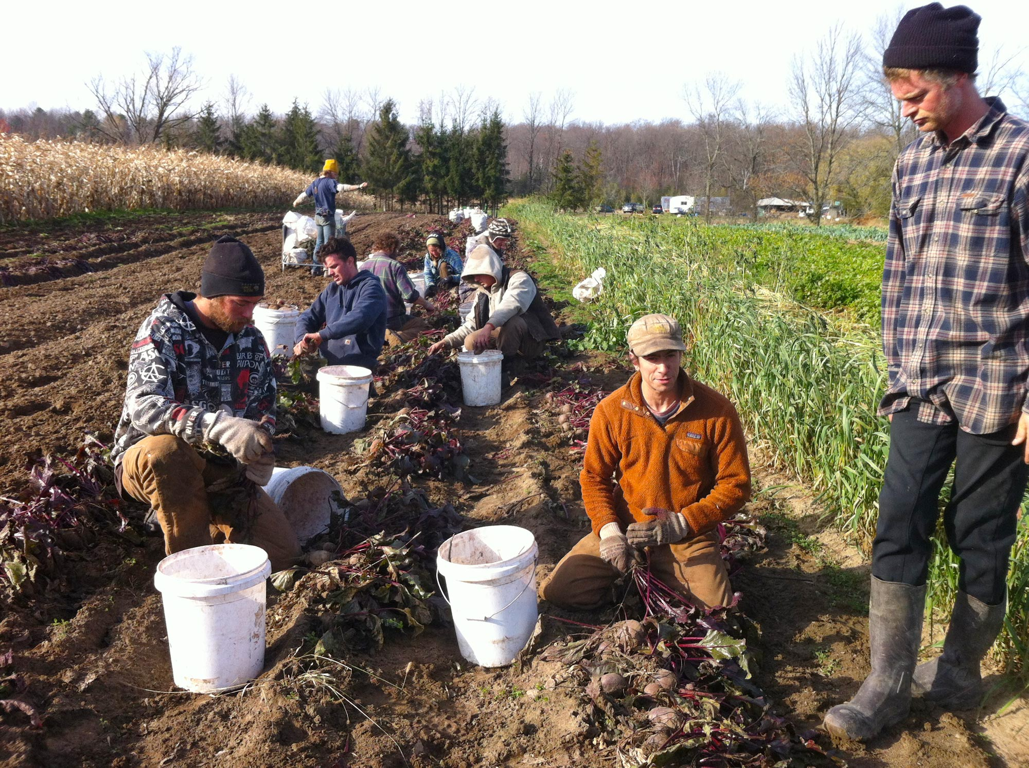 Essex farms grows beets and young farmers. Photo by Kristin Kimball.