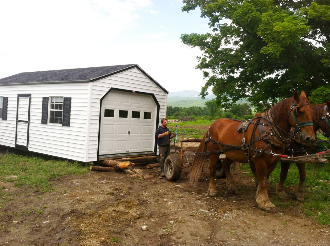 The draft horses at Reber Rock Farm move the new farm store building into position. Photo by Racey Bingham.