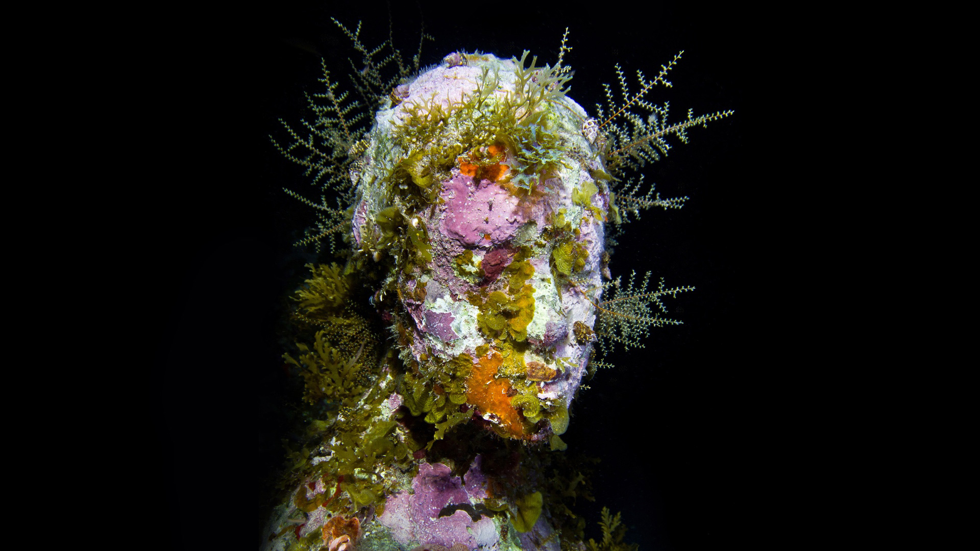 Underwater sculpture by Jason deCaires Taylor. Photo: Jason deCaires Taylor.