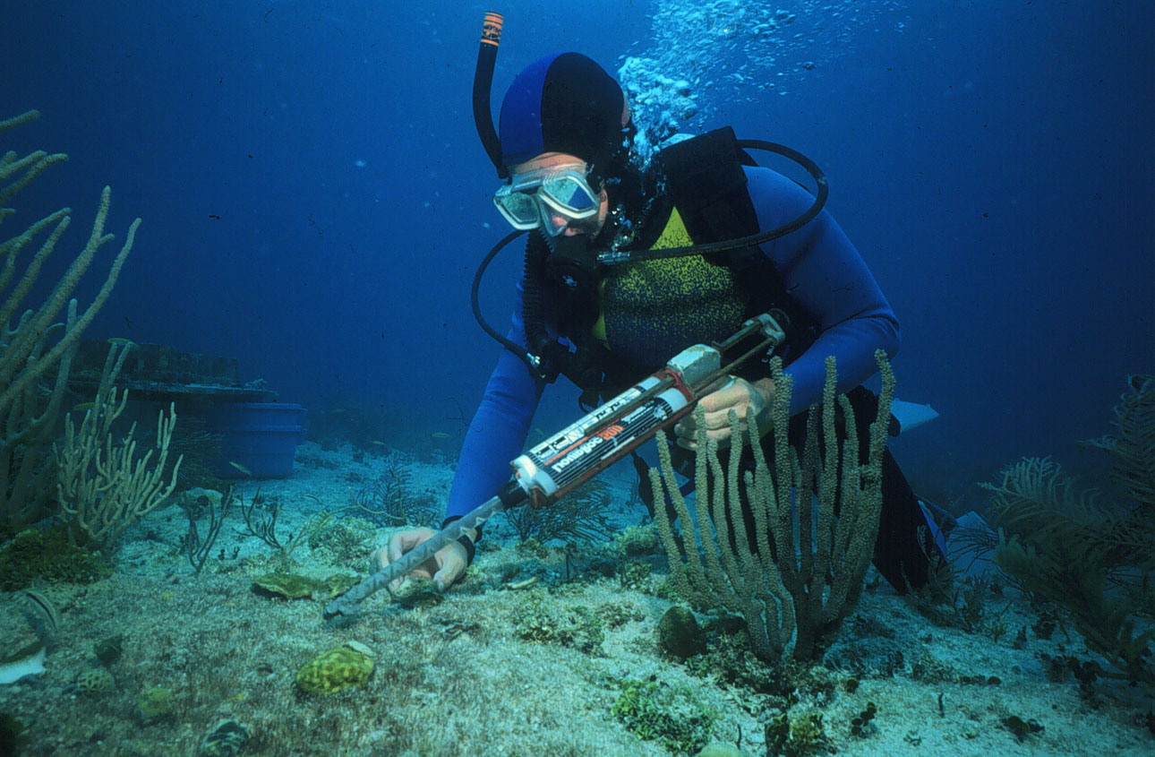 A biologist uses a glue gun to reattach a piece of living coral broken lose when a boat went aground on the shallow coral reef. Photo by the NOAA National Ocean Service.